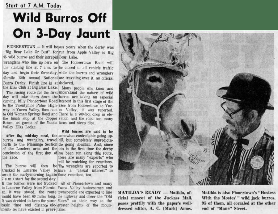 burro race artcile clipping